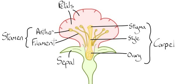2 growing plants national 4 biology all you need to do is buy the seeds and plant them in the soil or in some compost the downside of growing plants ccuart Images